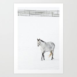 Winter White Horse Art Print
