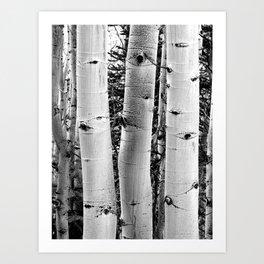 Three Aspens Black & White Art Print