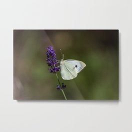 Butterfly on lavender, green blurry background Metal Print