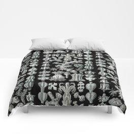 Ernst Haeckel - Gorgonida Comforters