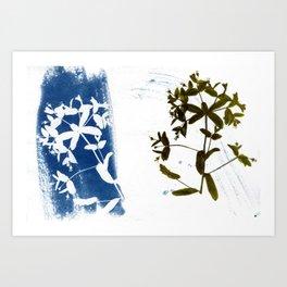 Solar Herbalism #2 Art Print