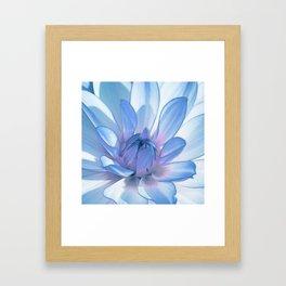Dahlia blue 202 Framed Art Print