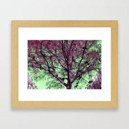 Parisian tree pigeon Framed Art Print