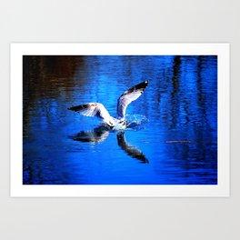 Seagull 3 Art Print