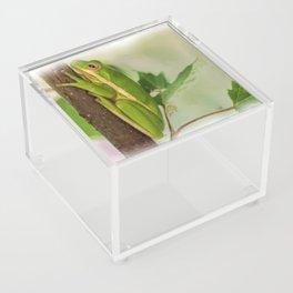 Painted Green Tree Frog Acrylic Box
