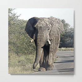 CArt Elephant 118 Metal Print