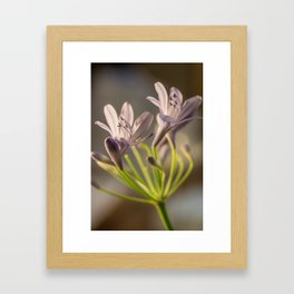 Bunches of Purple Framed Art Print