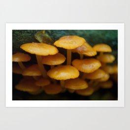Mushroom Family Botanical / Nature Photograph Art Print