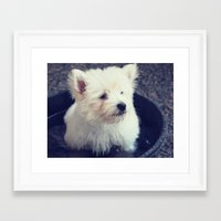 westie Framed Art Prints featuring Westie by Courtney E Photography