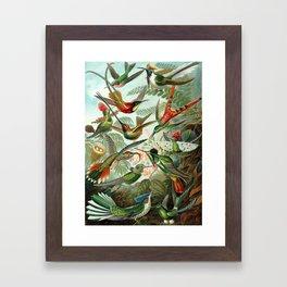 Ernst Haeckel - Artforms in Nature: Trochilidae,1904 Framed Art Print