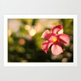 Pink Mandi Art Print