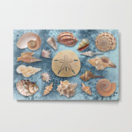 Seashells collection #1 Metal Print