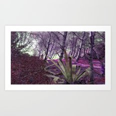Paloma Baja Art Print
