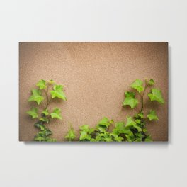 young leaves of hedera helix ivy Metal Print