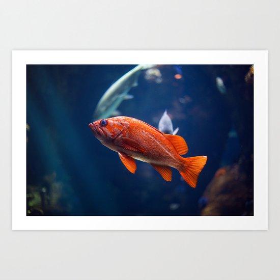 Red fish water Art Print