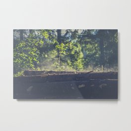 Logs stacked in the forest Metal Print