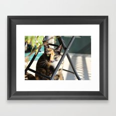 Calliope on the Porch Framed Art Print