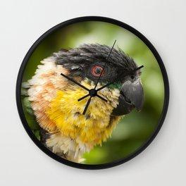 Preening parrot Wall Clock