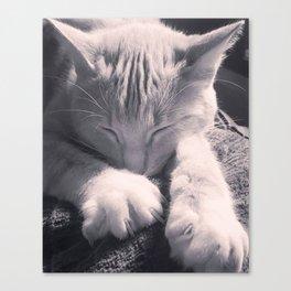 Sleepy Time Cat Canvas Print