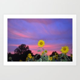 Sunflower Sunset love Art Print
