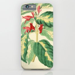 Flower 1227 justicia picta East Indian Caricature Plant14 iPhone Case
