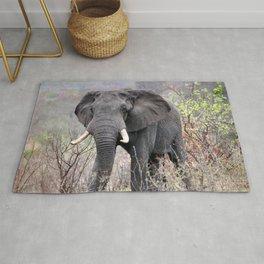 Elephant Kruger National Park Rug