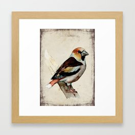 Hawfinch Framed Art Print
