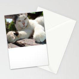 Black and White Bicolor Cat Lounging on A Park Bench Stationery Cards