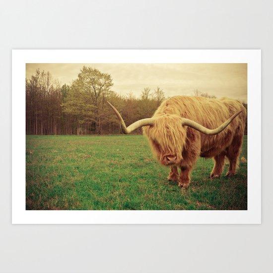 Scottish Highland Steer - regular version Art Print