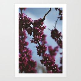 bloomin dayz Art Print