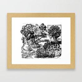 Childs' Dwarf Nasturtiums 1895 Framed Art Print