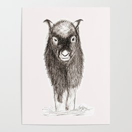 Baby Musk Ox Poster