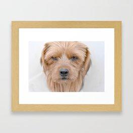 Intense Stare Framed Art Print