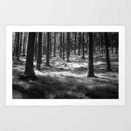 Forest in Buttermere, Lake District, England Art Print