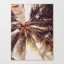 Yucatan Palmera Canvas Print
