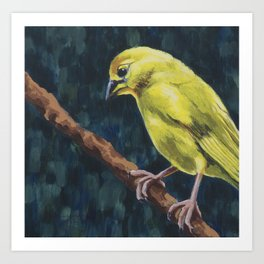 Saffron Finch Art Print