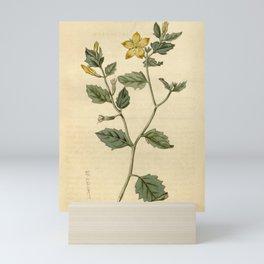Flower 1760 mentzelia oligosperma Few seeded Mentzelia10 Mini Art Print