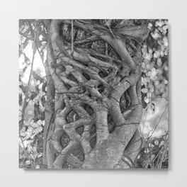 Tangled strangler fig Metal Print