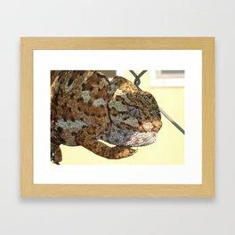 Chameleon Hanging On A Wire Fence Framed Art Print