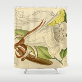 Baikiaea insignis, Fabaceae, Caesalpinioideae 1919 Shower Curtain