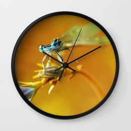 Morning impresion with blue dragonfly Wall Clock