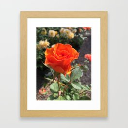 Nameless Rose Framed Art Print