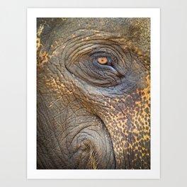 Close-up Elephant eye Art Print