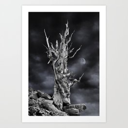 The ghost of Pinus longaeva 2. Art Print