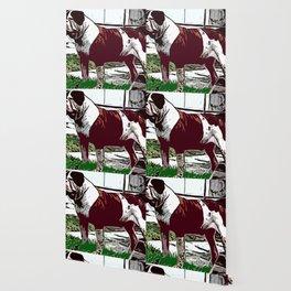 American Bulldog Wallpaper
