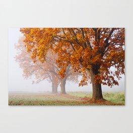 Oaks in the misty Autumn morning (Golden Polish Autumn) Canvas Print