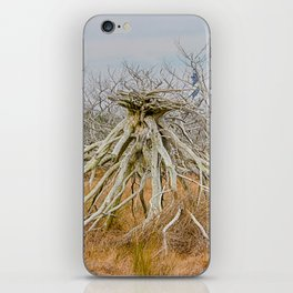 Cape Hatteras Lighthouse thru the Trees iPhone Skin