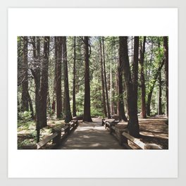 Yosemite Woods Art Print