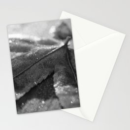 Frost Covered Leaf Black & White Botanical / Nature Photograph Stationery Cards
