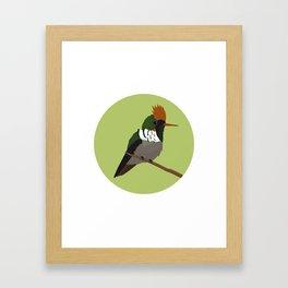 Frilled Coquette Framed Art Print